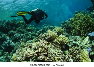 scuba diver swims over amazing coral reef
