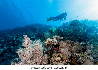 A SCUBA diver swims over a gorgonian fan on a coral reef