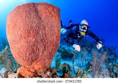 SCUBA diver in a technical sidemount configuration next to a huge sponge
