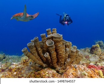 Scuba diver, tropical coral reef and swimming green sea turtle (Chelonia mydas) in blue ocean. Marine animal, ocean life and scuba diving tourist. Shallow sea life, underwater photography.