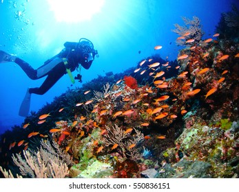 scuba diver and tropical fishes