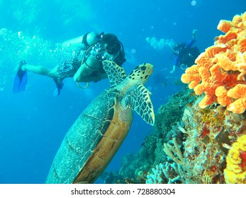 a scuba diver and a turtle in the ocean