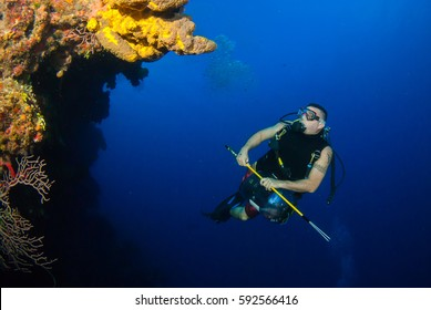 A scuba diver is underwater on the hunt for venomous invasive lionfish. This species is causing environmental damage in the Caribbean sea so people cull them and then sell them to restaurants for food