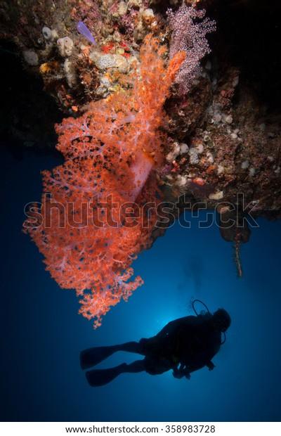 Scuba diver and a vibrant orange soft coral