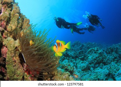 Scuba Divers and Anemonefish