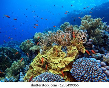 SCUBA DIVERS AND BEAUTIFUL UNDERWATER WORLD WITH MANY FISHES AND CORALS EGYPT RAS MAHAMAD NATIONAL PARK