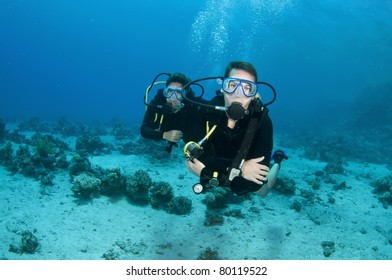 Scuba divers enjoy a scuba