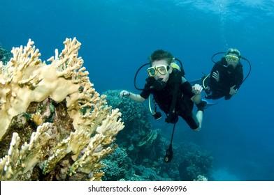 scuba divers enjoy a dive and look at coral