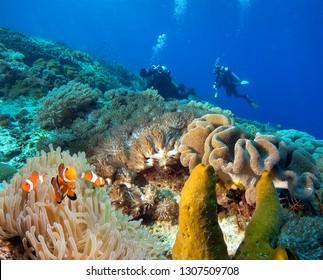 Scuba divers explore the beautiful coral reff.