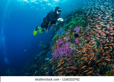 SCUBA divers exploring a colorful, beautiful tropical coral reef system