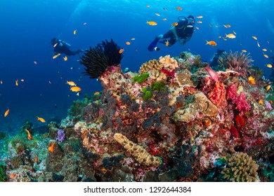 SCUBA divers exploring a tropical coral reef