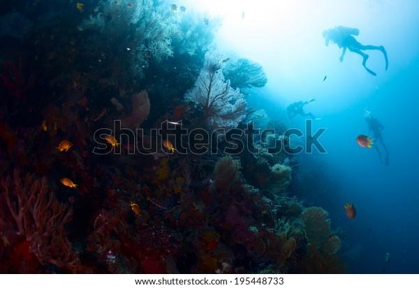 Scuba divers exploring underwater reef wall