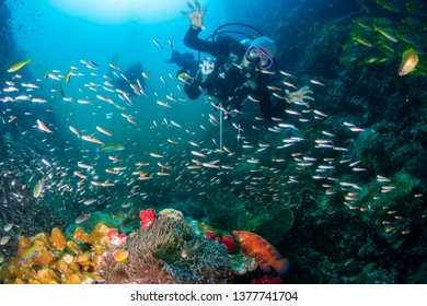 SCUBA divers over a colorful tropical coral reef in Thailand