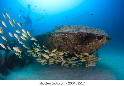 SCUBA divers and a shoal of snapper swim around a small underwater yacht wreck