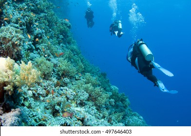 Scuba divers swim over colorful tropical coral reef, Red sea, Egypt.