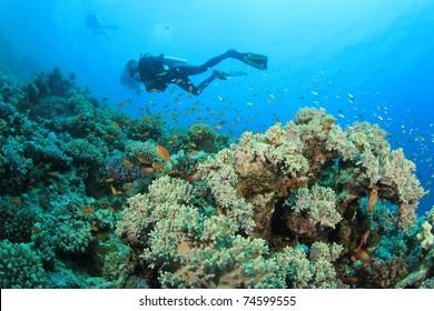 Scuba divers swim over colorful Coral Reef