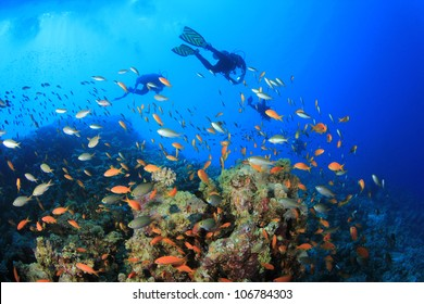 Scuba Divers swim over coral reef with tropical fish