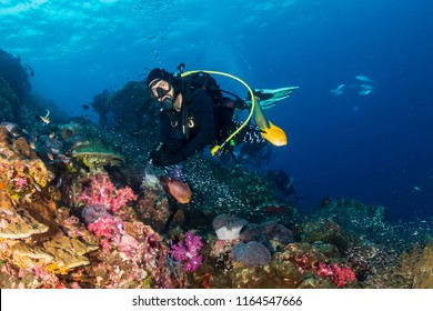 SCUBA divers swimming over a colorful, healthy tropical coral reef