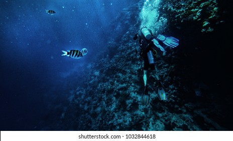 scuba divers under the water