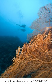 SCUBA Divers and yellow sea fan