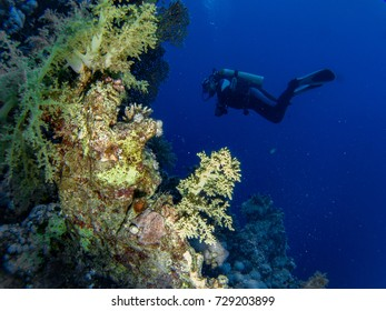 Scuba diving with beautiful corals in the Red Sea in Egypt