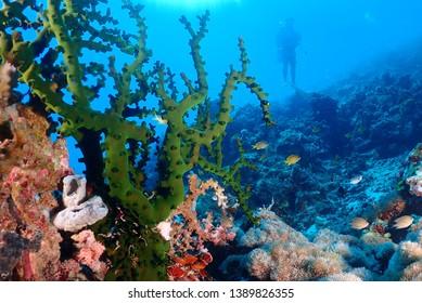 scuba diving in  cebu philippine