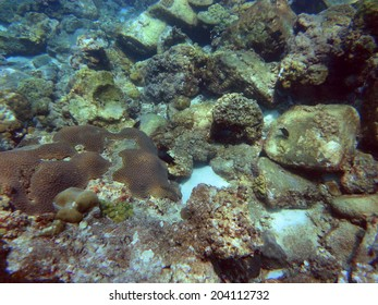 Scuba diving the coral reef of Thailand