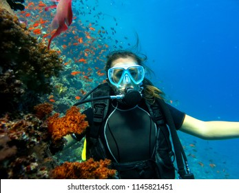 Scuba diving. A diver is posing underwater. Red Sea , Egypt