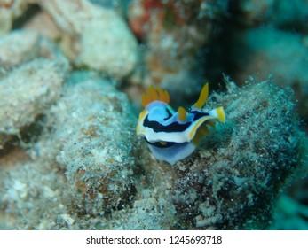 Scuba Diving in Kokopo and Rabaul , Papau New Guinea