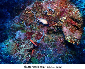 Scuba Diving in Kokopo Town and Rabaul Twon , East New Britain , Papau New Guinea. Here are some of the best dive sites in whole Papau New Guinea .