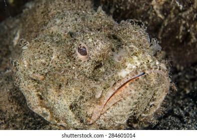 scuba diving lembeh indonesia devil scorpionfish