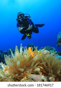 Scuba Diving with Nemo fish