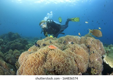 Scuba Diving on a coral reef with Anemones and Clownfish