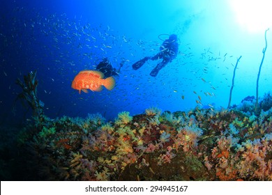 Scuba Diving on Coral Reef Underwater in Ocean