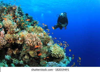 Scuba Diving on reef