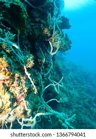 Scuba diving is one of the best things to in Papua New Guinea , East New Britain. Healthy Rabaul Reefs