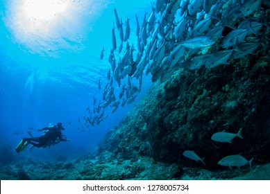a scuba diving photographer with school jackfish in Losin, Thailand