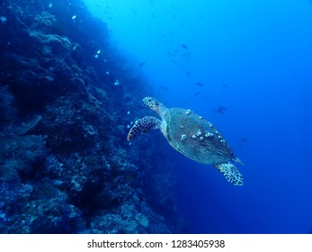 Scuba Diving in Rabaul and Kokopo , Papau New Guinea . Wall dives filled with coral reefs with amazing visibility up to 35 m