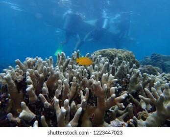 Scuba Diving in Rabaul , Papau New Guinea