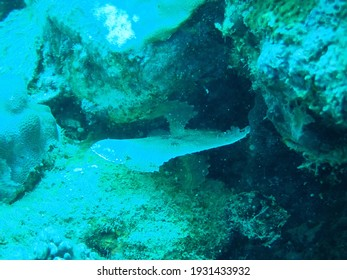 scuba diving to see the wild life under water, seascape, beautiful marine.