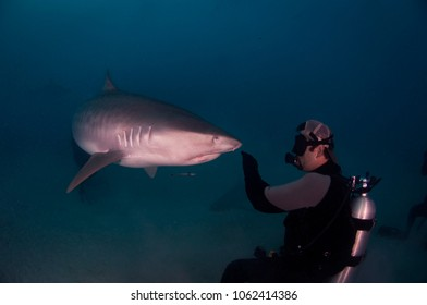 SCUBA Diving with Tiger Shark