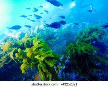 Scuba Diving Tutukaka & Poor Knights Islands Marine Reserve