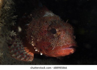 Sculpin Fish in the shadows