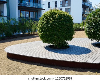 Sculpted trimmed in round shape trees trees in the city urban decorative gardening