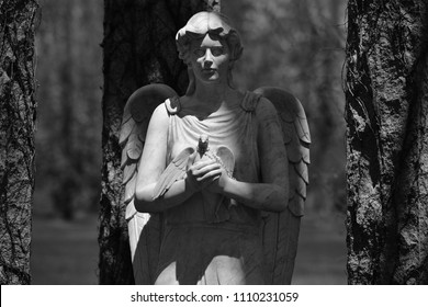 Sculpture of an angel with a dove in her hand on a grave of the cemetery of Montreal-Canada