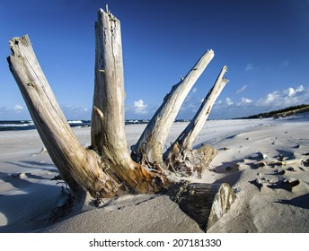 sculpture nature - the root of a new life on the beach