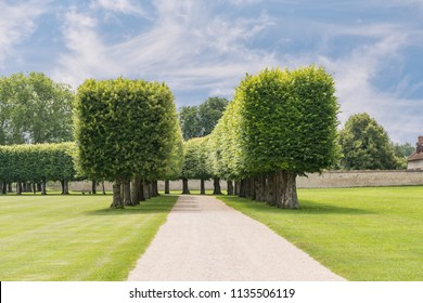 Sculptured Garden Trees of Chateau de Chambord, France which is the largest enclosed public park in Europe.
