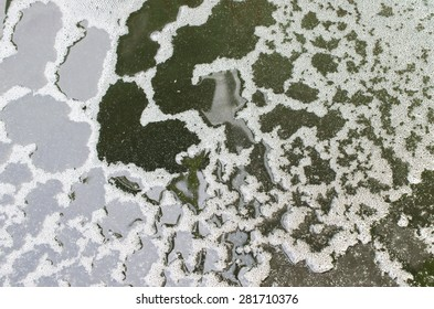 Scum bubbles floating on a surface of polluted water