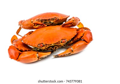Scylla serrata. Two steamed crab isolated on white background with copy space. Seafood restaurants concept.