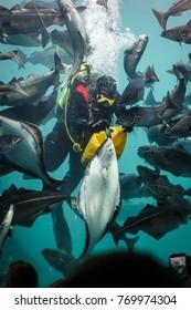 Sea aquarium in Alesund Norway with many fishes